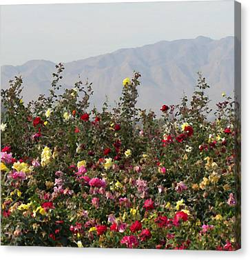 Field Of Roses Canvas Print by Laurel Powell