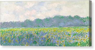 Impressionist Landscape Canvas Print - Field Of Yellow Irises At Giverny by Claude Monet