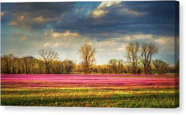 Field Of Crops Canvas Print - Fields Of Clover by James Barber