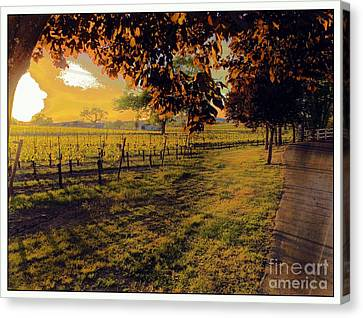 Fields Of Gold Canvas Print by Leslie Hunziker