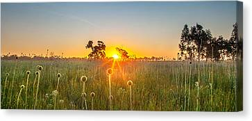 Fields Of Gold Panorama Canvas Print by Az Jackson