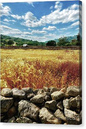 Fields Of Gold Canvas Print by Stephan Grixti