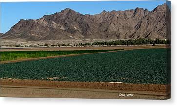 Fields Of Yuma Canvas Print by Greg Patzer
