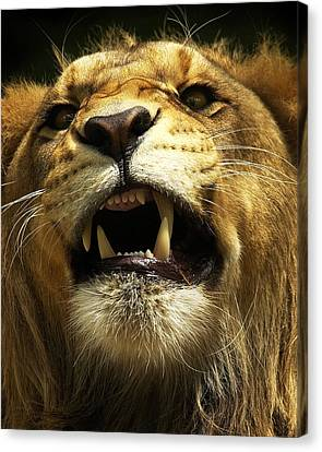 Fierce Canvas Print by Wade Aiken