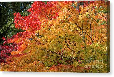 Fiery Autumn Canvas Print by Tim Gainey