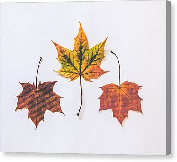 Red Leaf Canvas Print - Fiery Beauty by Kate Morton