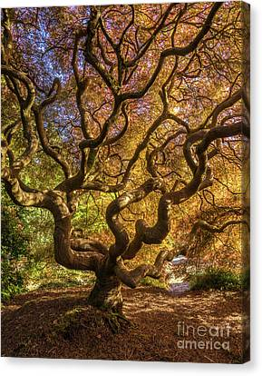 Fiery Fall Colors Tree Of Life Canvas Print by Mike Reid