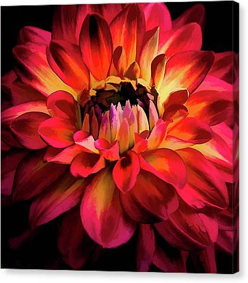 Canvas Print featuring the photograph Fiery Red Dahlia by Julie Palencia
