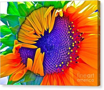 Fiesta Canvas Print by Gwyn Newcombe