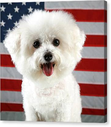 Fifi Loves America Canvas Print