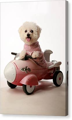 Fifi Ready For Take Off Canvas Print by Michael Ledray