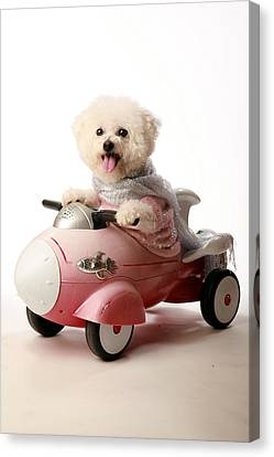 Fifi The Bichon Frise And Her Rocket Car Canvas Print by Michael Ledray