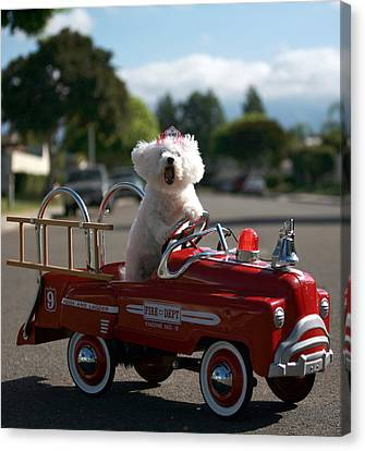 Fifi To The Rescue Canvas Print by Michael Ledray