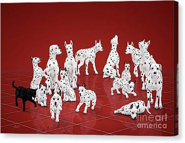 Fifteen Dalmations Canvas Print by Jutta Maria Pusl