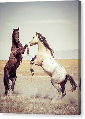 Fighting Stallions Canvas Print by Mary Hone