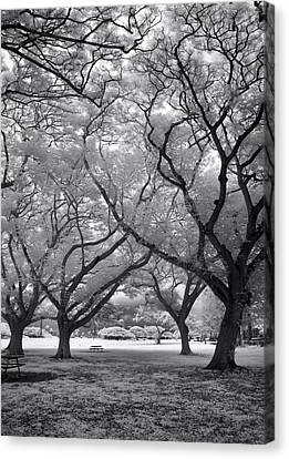 Fighting Trees Canvas Print by Sean Davey