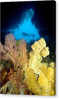 Fiji Underwater Canvas Print by Dave Fleetham - Printscapes
