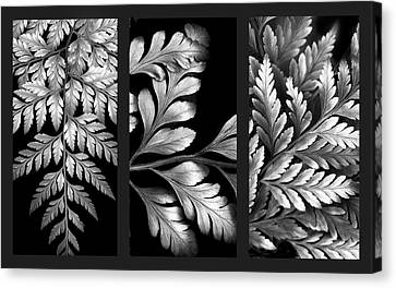 Filigree Fern Triptych Canvas Print