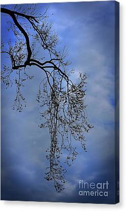 Canvas Print featuring the photograph Filigree From On High by Skip Willits