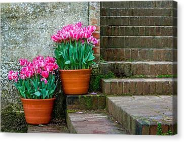Canvas Print - Filoli Tulips by Bill Gallagher