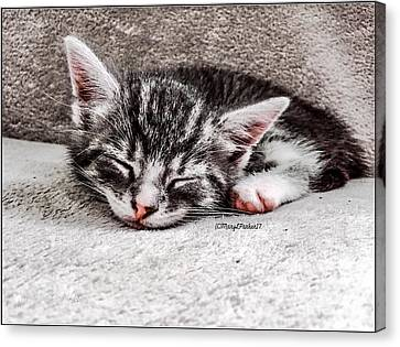 Finally Asleep  Copyright Mary Lee Parker 17  Canvas Print