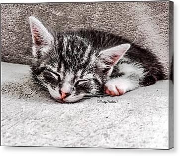 Finally Asleep  Copyright Mary Lee Parker 17  Canvas Print