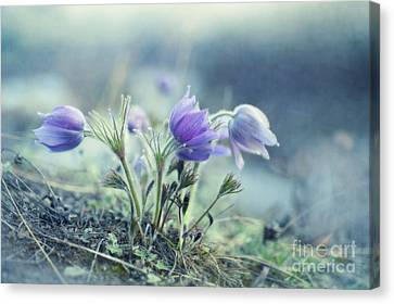 Finally Spring Canvas Print by Priska Wettstein