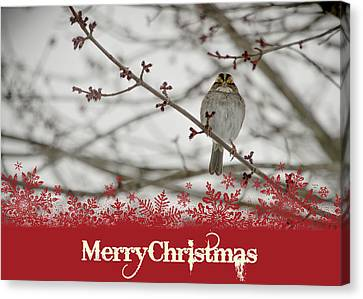 Canvas Print featuring the mixed media Finch Christmas by Trish Tritz