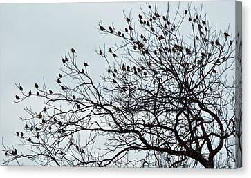 Finches To The Wind Canvas Print