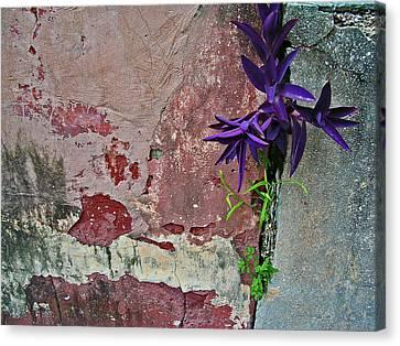 Finding Beauty Everywhere Canvas Print by Elizabeth Hoskinson