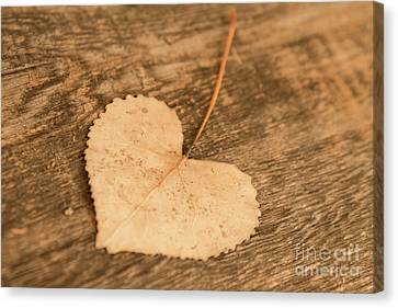 Canvas Print featuring the photograph Finding Hearts by Ana V Ramirez
