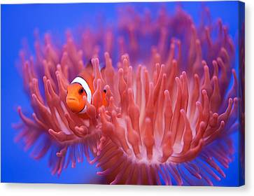 Finding Nemo Canvas Print by Wendy