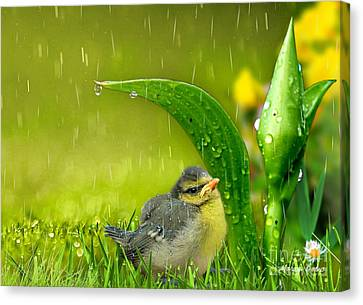 Finding Shelter Canvas Print by Morag Bates