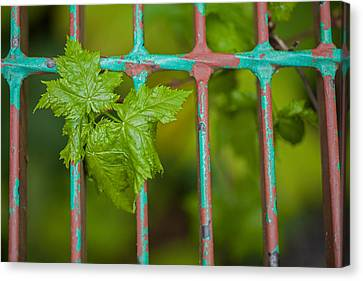 Canvas Print featuring the photograph Finding The Light by Fran Riley