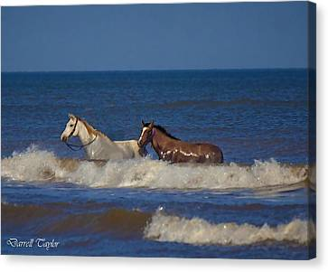 Fine Art America Pic 117 Horses At Surfside Canvas Print by Darrell Taylor