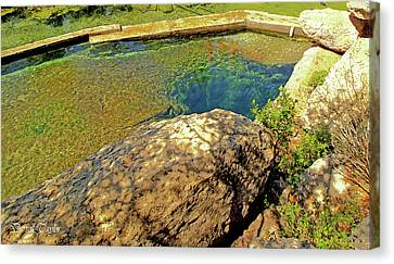Pool In Cave Canvas Print - Fine Art America Pic 121 Jacobs Well Close Up by Darrell Taylor