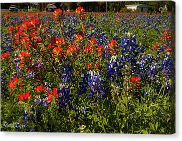 Fine Art America Pic 161 Closeup Of Wildflowers Canvas Print by Darrell Taylor