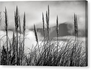 Fine Art Black And White-188 Canvas Print