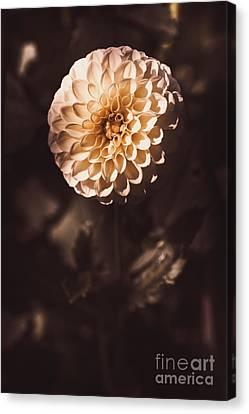 Fine Art Floral Photo. Orange Dahlia Flower Canvas Print