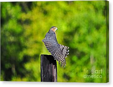 Canvas Print featuring the photograph Fine Feathers by Al Powell Photography USA