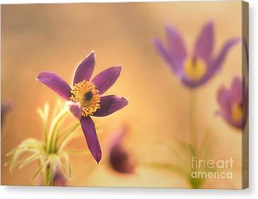 Fine Flower In Detail Canvas Print by Tanja Riedel