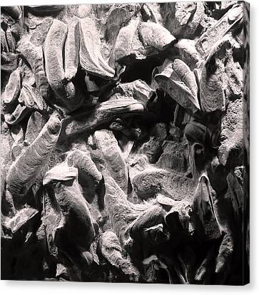 Canvas Print featuring the photograph Fingers Of Time - Giant Oyster Shell Fossils by Menega Sabidussi