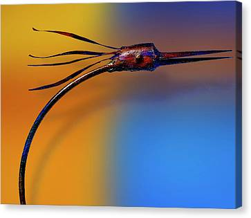 Canvas Print featuring the photograph Fire Bird by Paul Wear