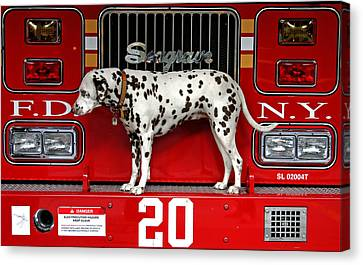 Fire Dog Canvas Print by Bryan Hochman