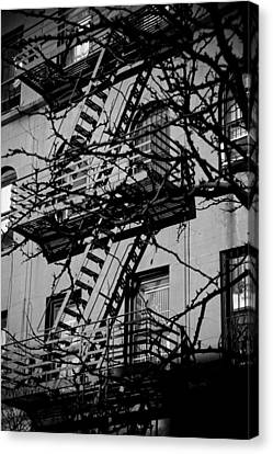 Fire Escape Tree Canvas Print by Darren Martin