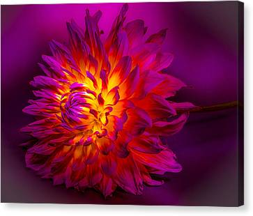 Fire Flower Canvas Print by Bruce Pritchett