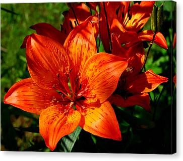 Canvas Print featuring the photograph Fire Lilies by Marilynne Bull