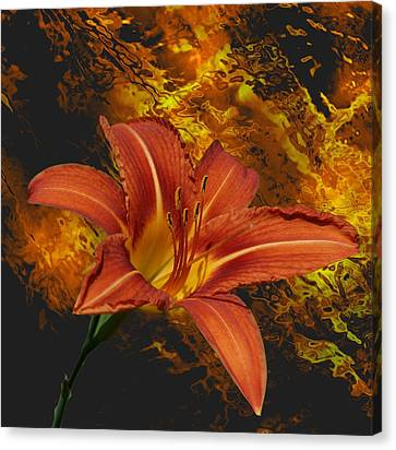 Fire Lilly Canvas Print by Rick Friedle