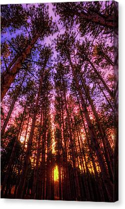 Fire Sky - Sunset At Retzer Nature Center - Waukesha Wisconsin Canvas Print by Jennifer Rondinelli Reilly - Fine Art Photography