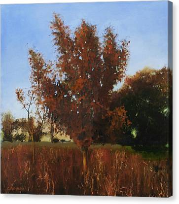 Fire Tree 3 Canvas Print
